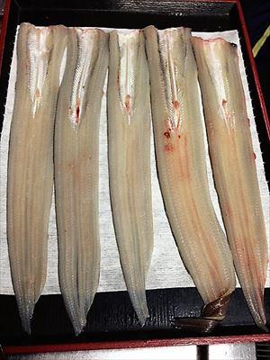 長い魚たち