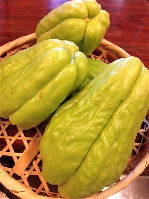 川上村の白菜
