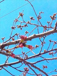 春・・・感じています!