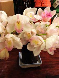 蘭の花 今年も元気です!